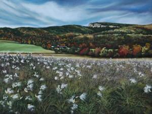 Milkweed Field